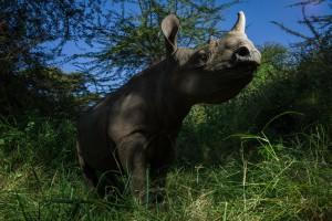 Fotografia tirada durante produção do livro, A jornada do rinoceronte por  Érico Hiller